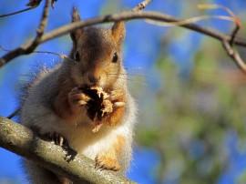 Oravaa ei saa ottaa lemmiksiksi, eikä se hyvä idea olisikaan. Kuva: Maija Karala
