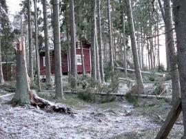 Talvimyrskyt ovat viime vuosina aiheuttaneet paljon metsätuhoja.