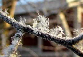 Jokainen lumihiutale syntyy kiinteän hiukkasen ympärille. Monessa tapauksessa alkuunpanija on bakteeri. Kuva: Maija Karala