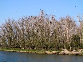 Valtio osti Uudenkaupungin edustalta Urpoisten saaren pari vuotta sitten luonnonsuojelualueeksi juuri saaressa pesivien merimetsojen takia. Linnut havittelevat lisää elintilaa myös naapurisaarista.