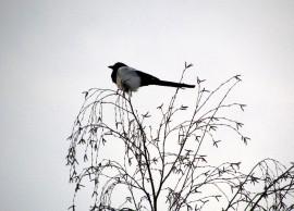 Talvi pelkistää luonnon harmaasävyiseksi, eikä elämää muutaman harakan ja tiaisen lisäksi juuri näy.