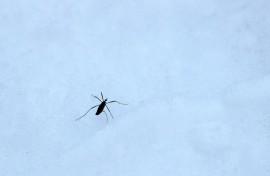 Lumivaaksiainen kulkee pikkupakkasellakin. Kuva: Maija Karala