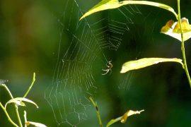 Hämähäkinverkko on luonnon omaa huipputeknologiaa.